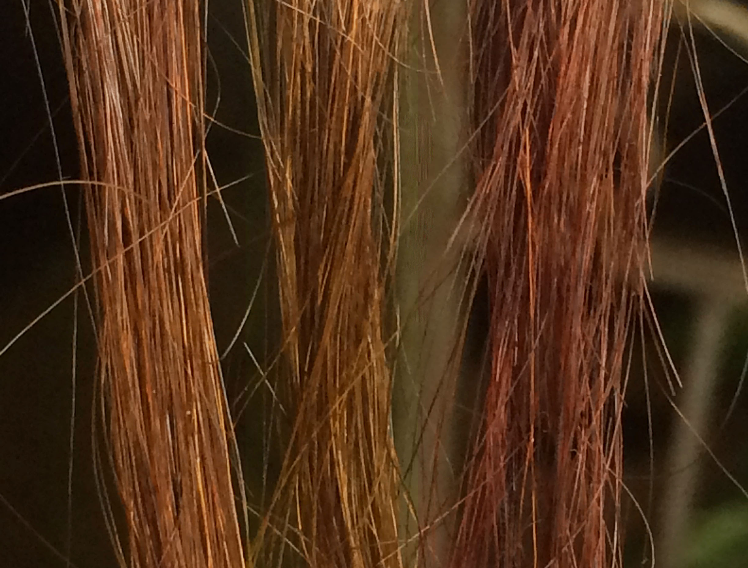 How To Remove Henna And Herbal Hair Dye From Your Hair