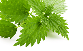 nettle-icon.png